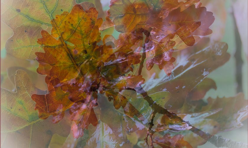 S_FIRST PLACE – Shades of Autumn by Mike Brindle LRPS copy